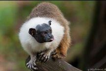 Leuke dieren foto's / Allerlei beesten die ik tegenkom, of opzoek.
