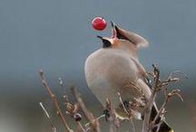 Birds / birds, location, outlook