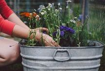 Container Gardening / Ideas for creative uses of materials and containers in the garden.