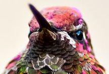 Colourful Birdies