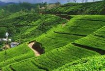 Tea Estates / Let's visit the beauty of Tea Estates from all over the world