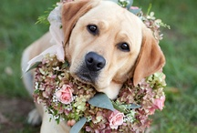 LabAdorable / Love those labradors! / by Rahna Summerlin Blooming In Chintz