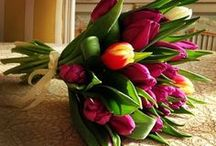 For the Love of Tulips / We're hot-n-heavy for this springtime flower.