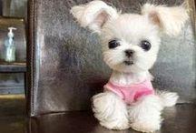 Cuteness Overload / Cute Stuff.........
