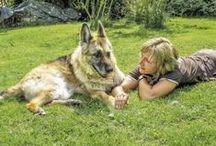 HundeTeamSchule (HTS) / Lehrvideo-DVDs der HundeTeamSchule