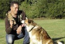 Hundetraining / Hundeschule LANA-Film® / Hundetraining / Hundeschule auf Lehrvideo-DVD