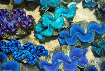 love blue / by Olivia Payne