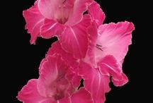love pink / by Olivia Payne