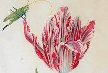 Art: Botanical illustrations / by Alix Mordant Genealogy art