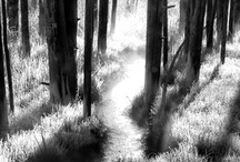 Light, White, Black Fine Art Gallery / Dramatic black and white images by Mark Kiver. http://1-mark-kiver.pixels.com/collections/black+and+white
