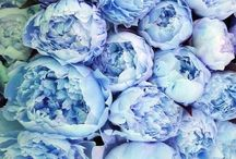 Bouquet•flowers