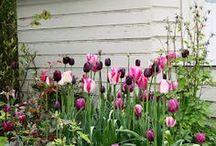 Milford garden Loves.....