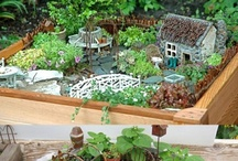 Yard and Gardening / by Sue Lauderman Mayfield
