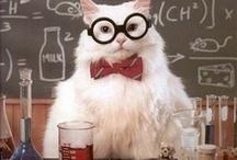 scientifical stuff