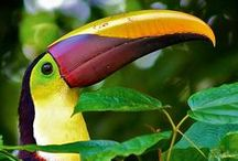 Costa Rica Travel Tips & Ideas / Costa Rica - Tropical Paradise and rich in biodiversity - an exceptional place to visit to view flora and fauna. Pura vida. Find the best places to stay and things to do and see in Costa Rica