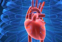Heart / Cardiac shape analisys and visualization