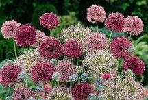 Garden ideas / flowers, plants, decorating ideas, trees, raised garden, herb garden