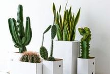 Indoor green / Indoor jungle - back to the 70's :-) ! Air plants, decorating with plants, air detox