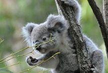 Travel - memories / Nature, animals, New Zealand, Madagascar, Australia, Costa Rica