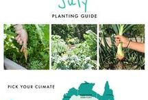 Planting Guide Australia Wide / Want to know what you can plant this month? Find it all right here :)