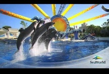 SeaWorld Parks / Unique encounters with exotic animals, breathtaking choreographed animal shows, thrilling roller coaster rides and a message that triumphs animal education and preservation is what makes the SeaWorld parks, SeaWorld Orlando, Busch Gardens, Discovery Cove and Aquatica, theme park experiences that transcend the typical theme park experience. Check out all the attractions and animal action at Orlando's SeaWorld parks!