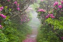Gardens / And self sufficiency / by Dawn Chorus Studio