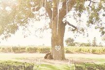 Wedding / by Tia Willover