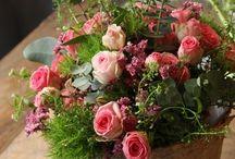 Blommor / Vackra blommor