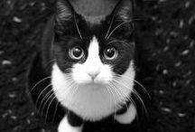 Black&WhiteCat
