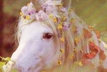 Fairy's& Unicorns  / by Amanda Southey