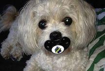 Doggy shaming :D