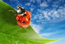 #Natural Pest Control