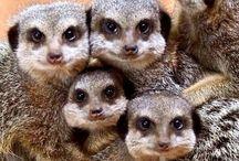 Cute Animals / Cutest animals.
