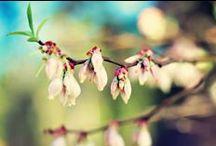 Natuur fotografie 'die ik leuk vind' / Natuur (niet zelf gemaakt)