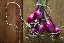 Ossessioni culinarie: la cipolla