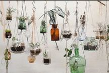 Hanging Plants / Inspirations for decorating home with plants