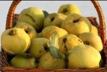 VERGETEN GROENTE & FRUIT / recepten voor vergeten groente en fruit. ook tips om deze groente zelf te kweken. geniet ervan!