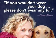 DIEREN WELZIJN/ animal welfare