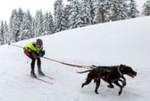 Animals love snow | SkiWebShop / or do they?