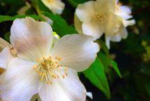 Nature / Nature de France et d'ailleurs. #fleurs #flowers #nature #floraison #blossom #printemps