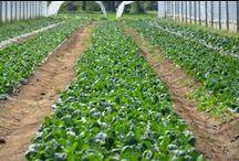 I suggerimenti di bioetico.net / Produttori agroalimentari, agriturismi, ristorazione di qualità
