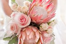 Greens - Flowers and Plants / Tipps and inspirations for flower arrangements and plants at home.