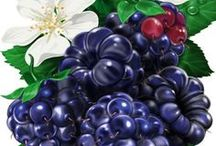 transfer 4 ovocie zelenina plody