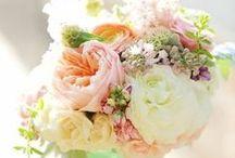 Wedding branding / by Forestre Design Studio
