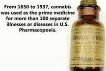 Hemp ☮ Medicinal Cannabis: Saving the Planet and Man`s life on it. / Factual and other information regarding the many uses of hemp and Cannabis- a plant able to address our current socio/economic/psychological issues, from deforestation and irradiation of land to providing a safe, sustainable fuel source... not to mention it being a proven cure for cancer (for as long as we have soil on the planet). / by SaℜaL
