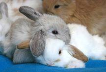 Bunnys / Bunnys