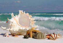 mušle - seashell