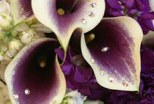 Bridal Flowers / by alyssa williams