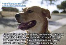 Astuces pour Chiens & Chats / Découvrez nos meilleures astuces pour prendre soin de vos chiens, chats et autres animaux domestiques.