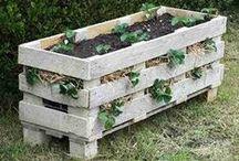 Plantes et Jardinage / Tous nos p'tits trucs et conseils pour vous aider avec votre jardin.
